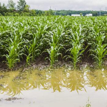 سیل در زمین کشاورزی