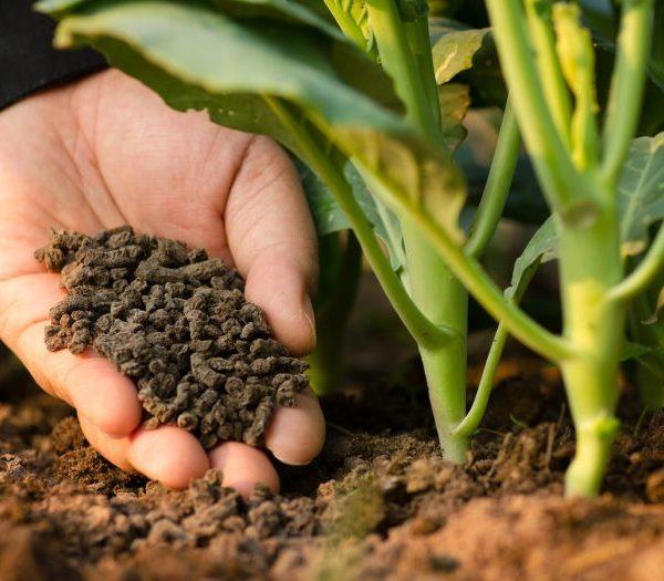 انتخاب کود کشاورزی