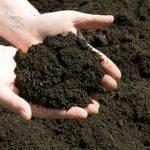 خاک حاصلخیز
