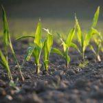 مدل سازی گیاهان زراعی