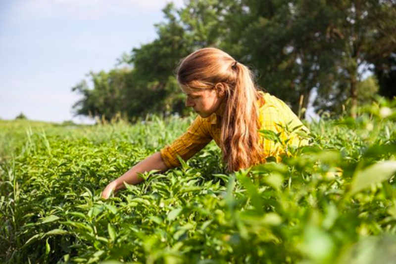 کشاورزی در پساکرونا